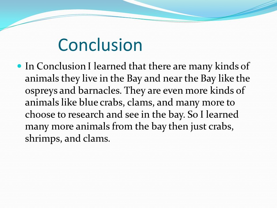 Conclusion In Conclusion I learned that there are many kinds of animals they live in the Bay and near the Bay like the ospreys and barnacles.