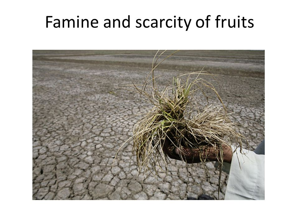 Famine and scarcity of fruits