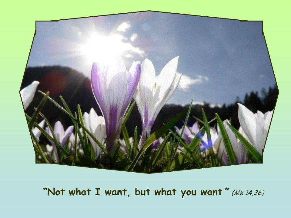 Word of Life April 2011