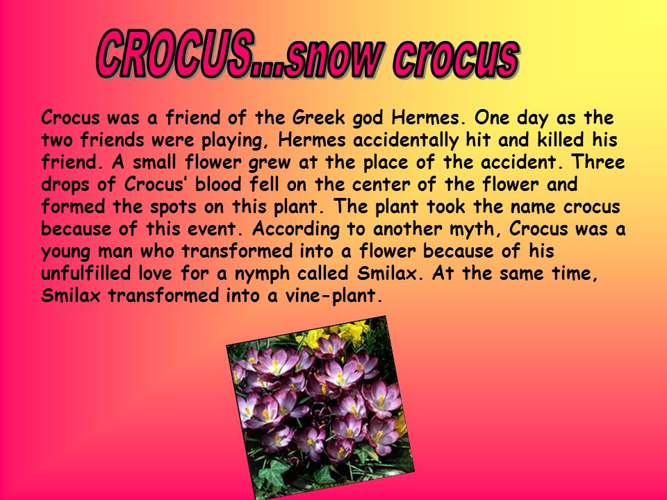 Crocus was a friend of the Greek god Hermes.