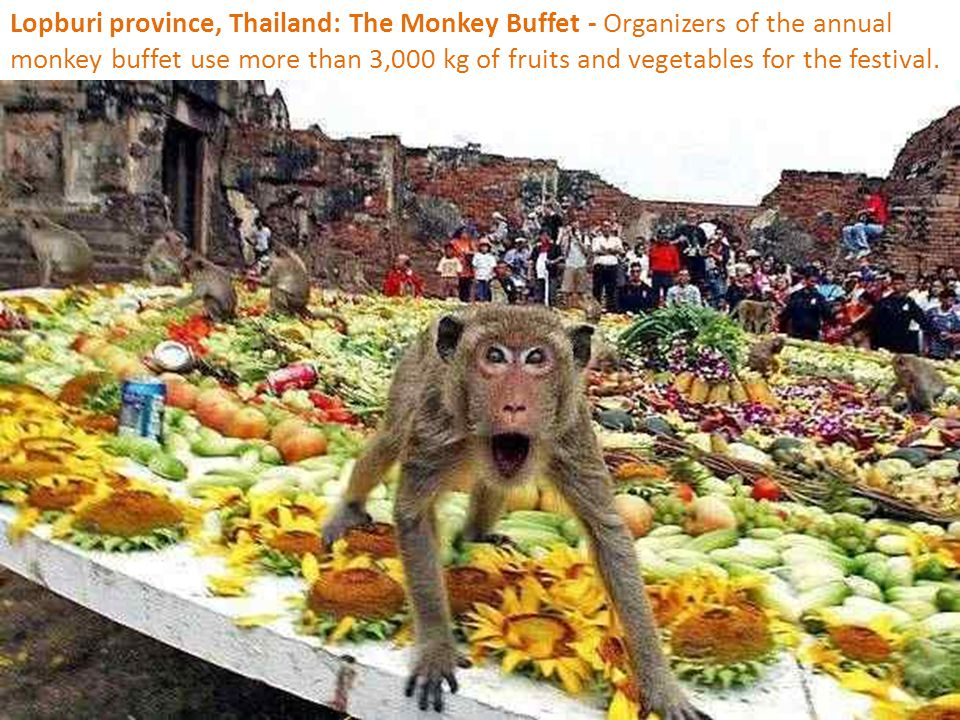 Lopburi province, Thailand: The Monkey Buffet - Organizers of the annual monkey buffet use more than 3,000 kg of fruits and vegetables for the festival.