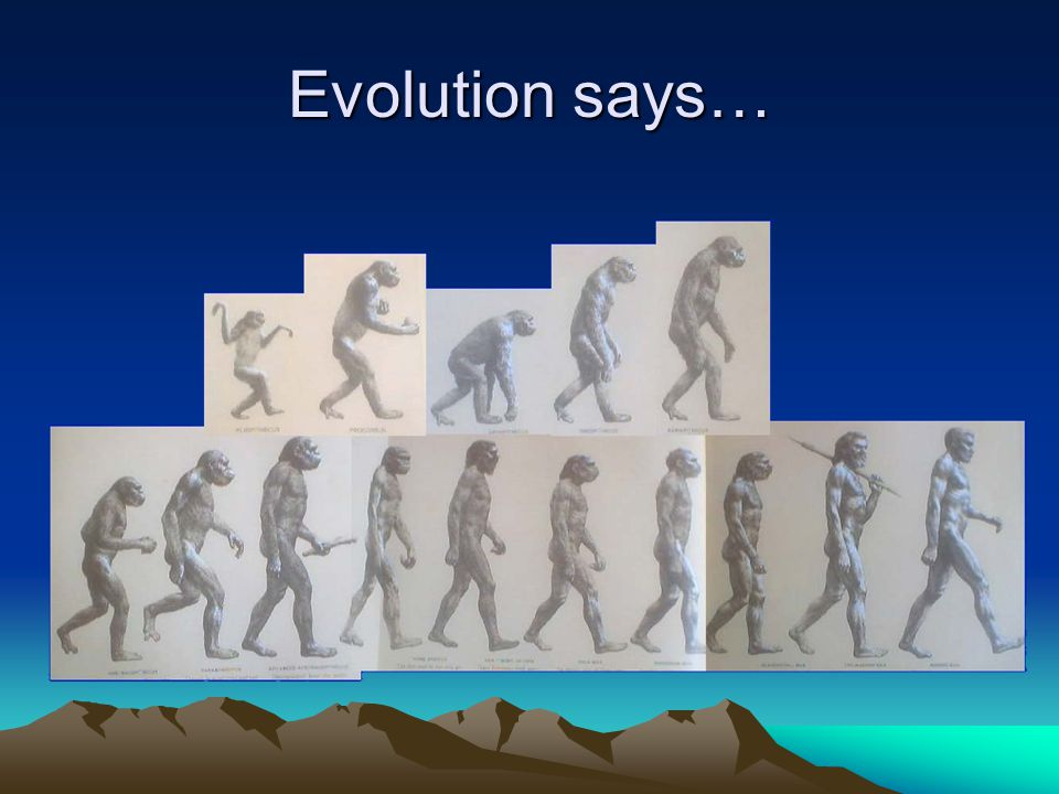 Evolution says…