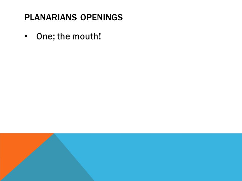 PLANARIANS OPENINGS One; the mouth!
