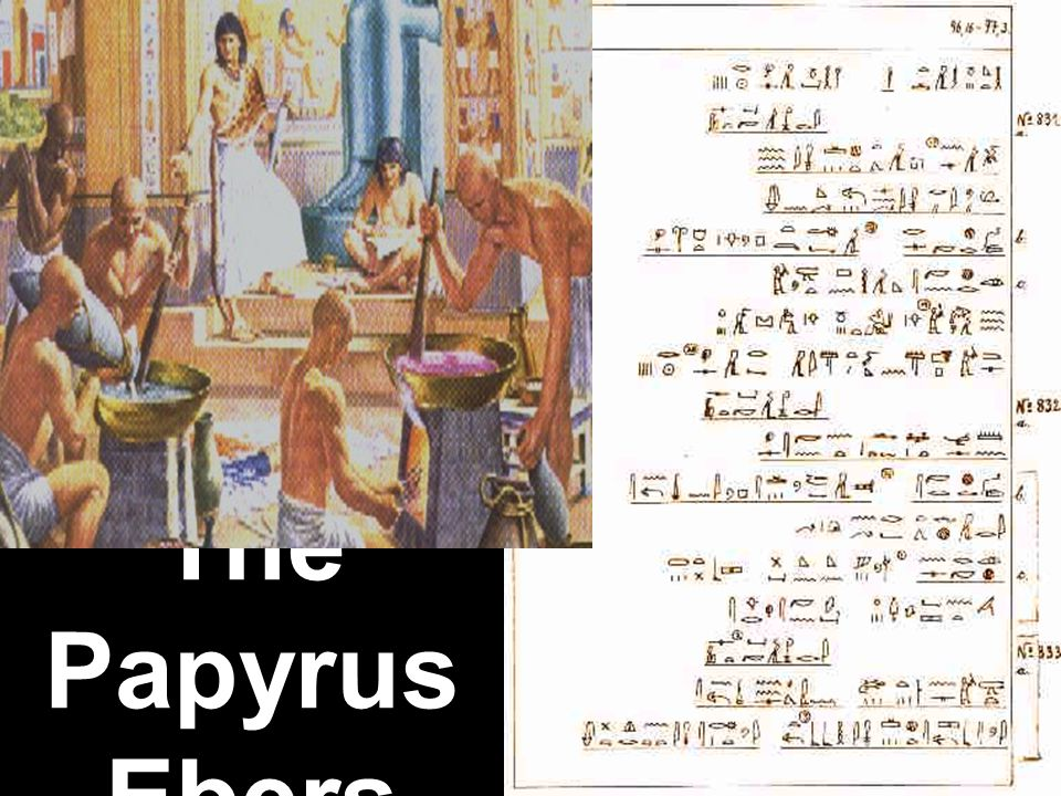 The Papyrus Ebers