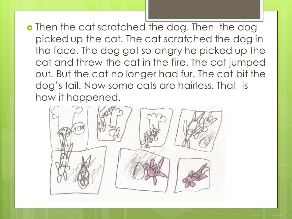  Then the cat scratched the dog. Then the dog picked up the cat.