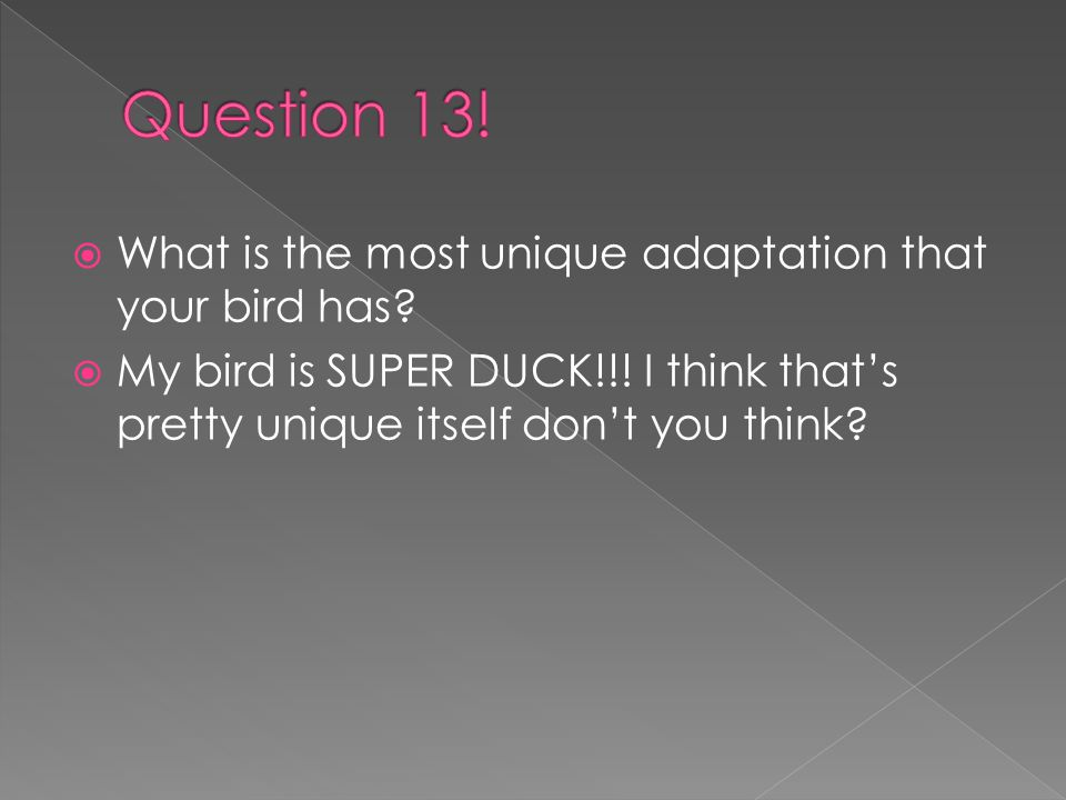 WWhat is the most unique adaptation that your bird has.