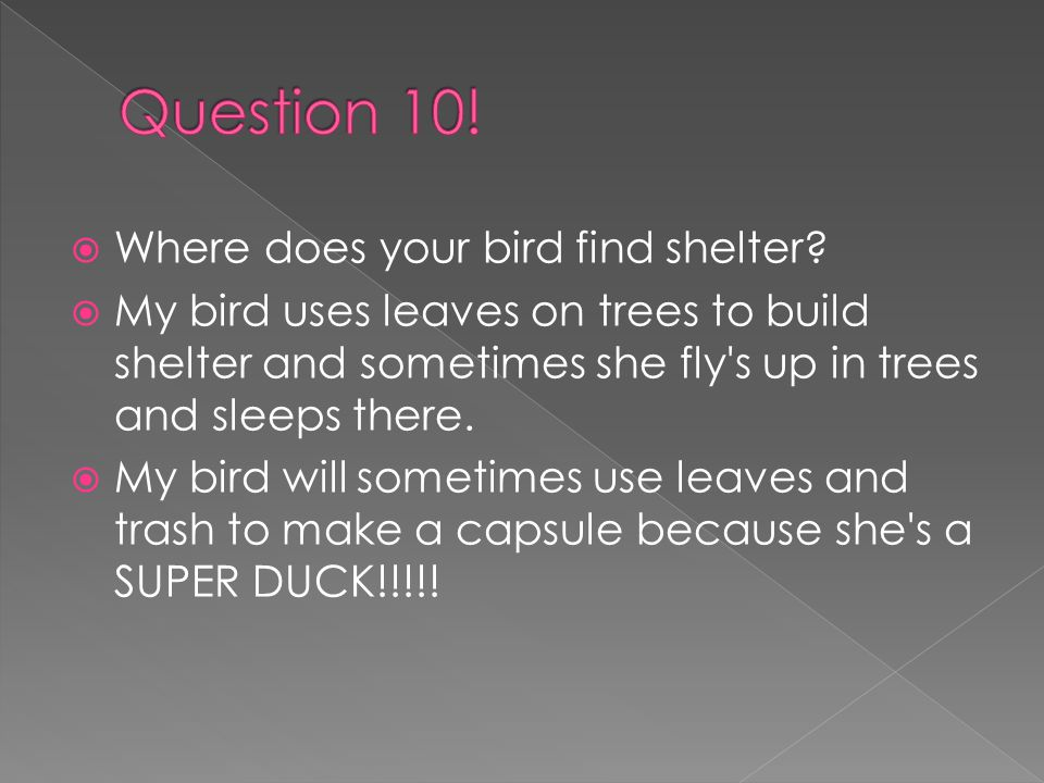 WWhere does your bird find shelter.