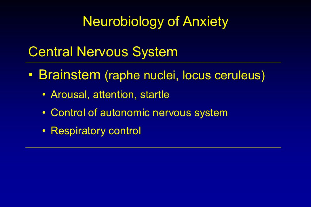 Neurobiology of Anxiety Central Nervous System Brainstem (raphe nuclei, locus ceruleus) Arousal, attention, startle Control of autonomic nervous system Respiratory control