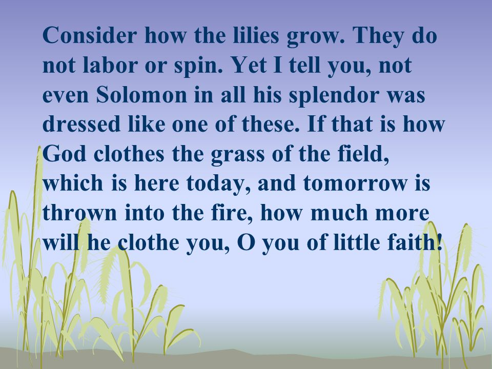 Consider how the lilies grow. They do not labor or spin. Yet I tell you, not even Solomon in all his splendor was dressed like one of these. If that i