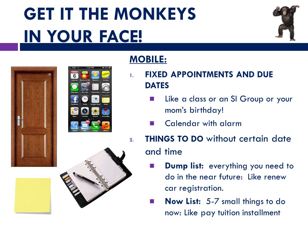GET IT THE MONKEYS IN YOUR FACE. MOBILE: 1.