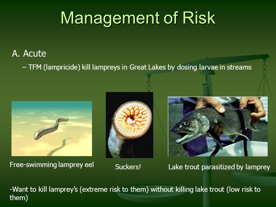 Management of Risk A.