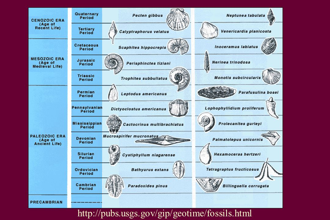 http://pubs.usgs.gov/gip/geotime/fossils.html