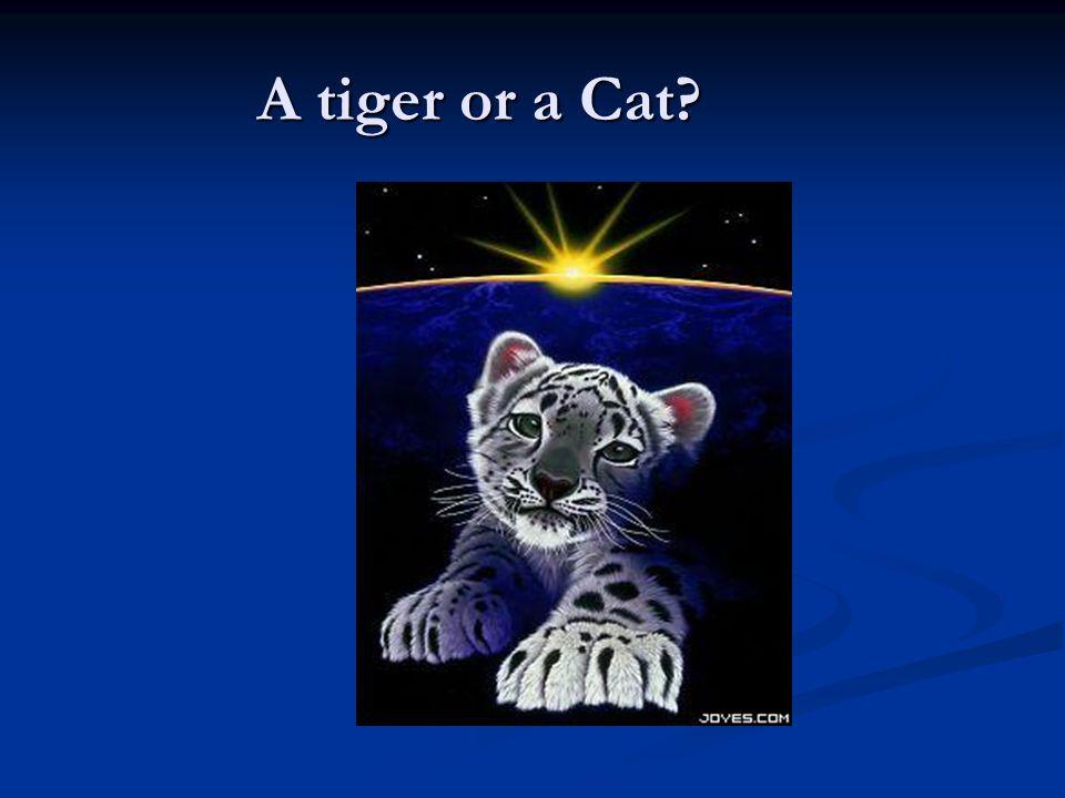 A tiger or a Cat?