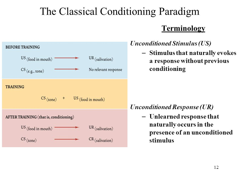 12 The Classical Conditioning Paradigm Terminology Unconditioned Stimulus (US) – Stimulus that naturally evokes a response without previous conditioning Unconditioned Response (UR) – Unlearned response that naturally occurs in the presence of an unconditioned stimulus