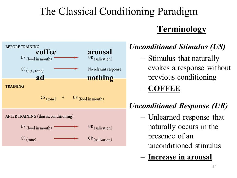 14 The Classical Conditioning Paradigm Terminology Unconditioned Stimulus (US) –Stimulus that naturally evokes a response without previous conditioning –COFFEE Unconditioned Response (UR) –Unlearned response that naturally occurs in the presence of an unconditioned stimulus –Increase in arousal coffeearousal adnothing