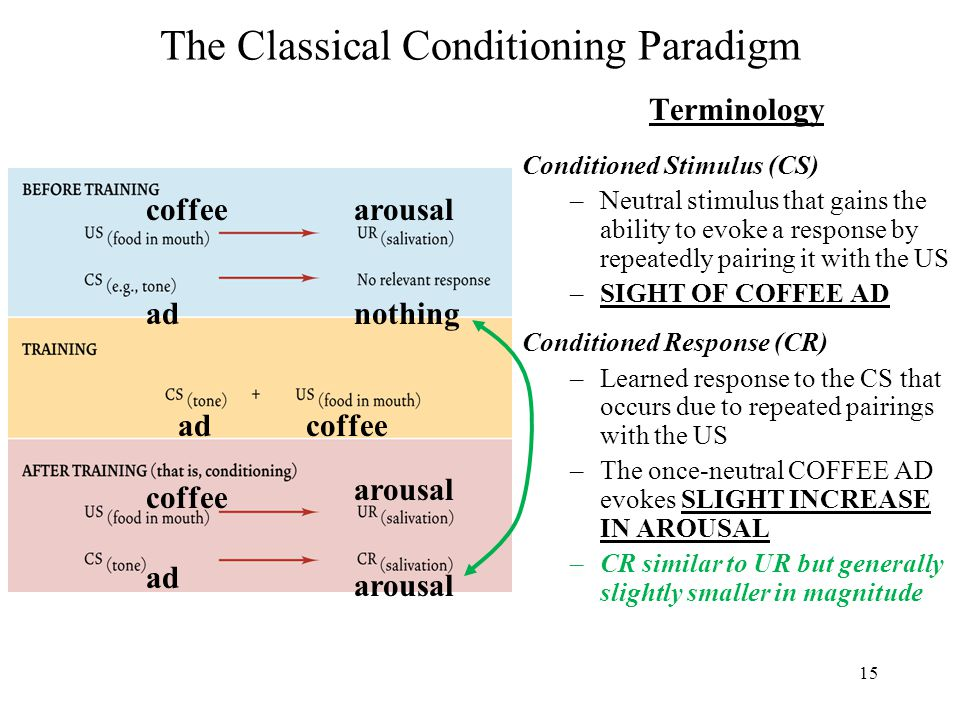 15 The Classical Conditioning Paradigm Terminology Conditioned Stimulus (CS) –Neutral stimulus that gains the ability to evoke a response by repeatedly pairing it with the US –SIGHT OF COFFEE AD Conditioned Response (CR) –Learned response to the CS that occurs due to repeated pairings with the US –The once-neutral COFFEE AD evokes SLIGHT INCREASE IN AROUSAL –CR similar to UR but generally slightly smaller in magnitude coffee ad arousal nothing adcoffee ad arousal