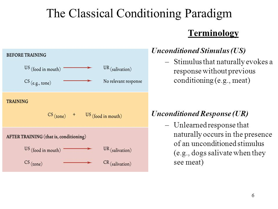 6 The Classical Conditioning Paradigm Terminology Unconditioned Stimulus (US) –Stimulus that naturally evokes a response without previous conditioning (e.g., meat) Unconditioned Response (UR) –Unlearned response that naturally occurs in the presence of an unconditioned stimulus (e.g., dogs salivate when they see meat)