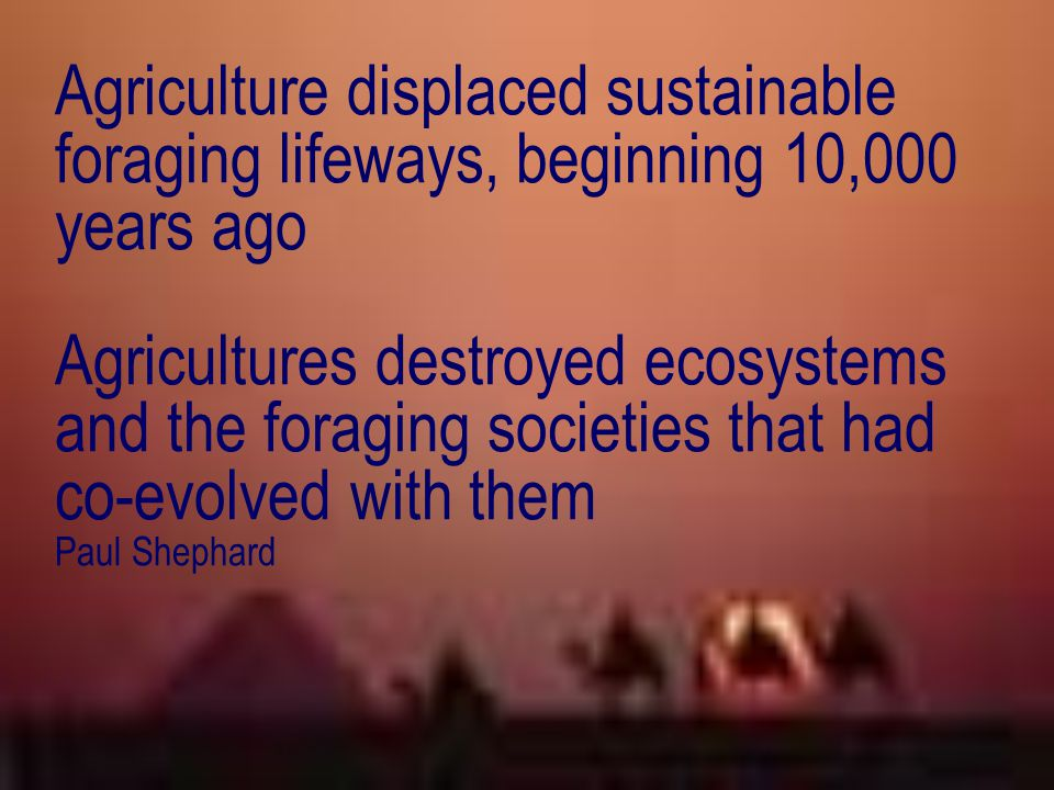 Agriculture displaced sustainable foraging lifeways, beginning 10,000 years ago Agricultures destroyed ecosystems and the foraging societies that had