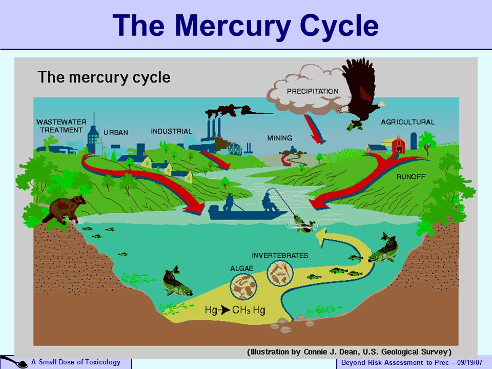 A Small Dose of Toxicology Beyond Risk Assessment to Prec – 09/19/07 The Mercury Cycle