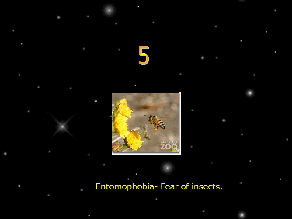 Entomophobia- Fear of insects.