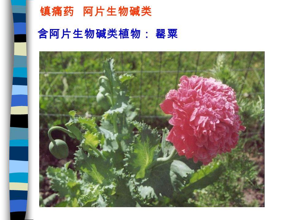 镇痛药 阿片生物碱类 含阿片生物碱类植物: 罂粟