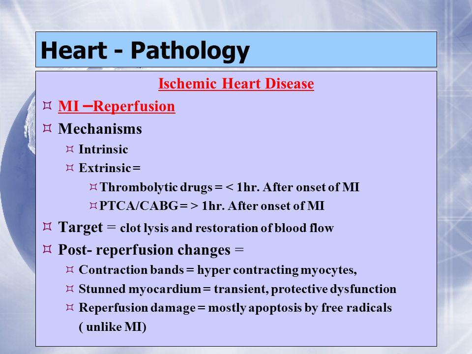 Heart - Pathology Ischemic Heart Disease  MI – Reperfusion  Mechanisms  Intrinsic  Extrinsic =  Thrombolytic drugs = < 1hr.