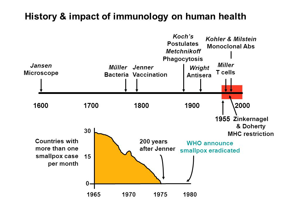 History & impact of immunology on human health 200 years after Jenner WHO announce smallpox eradicated 1965197019751980 Countries with more than one smallpox case per month 30 15 0 1700190018002000 Jenner Vaccination 1600 Jansen Microscope Müller Bacteria Koch's Postulates Metchnikoff Phagocytosis Wright Antisera Kohler & Milstein Monoclonal Abs 1955 Miller T cells Zinkernagel & Doherty MHC restriction
