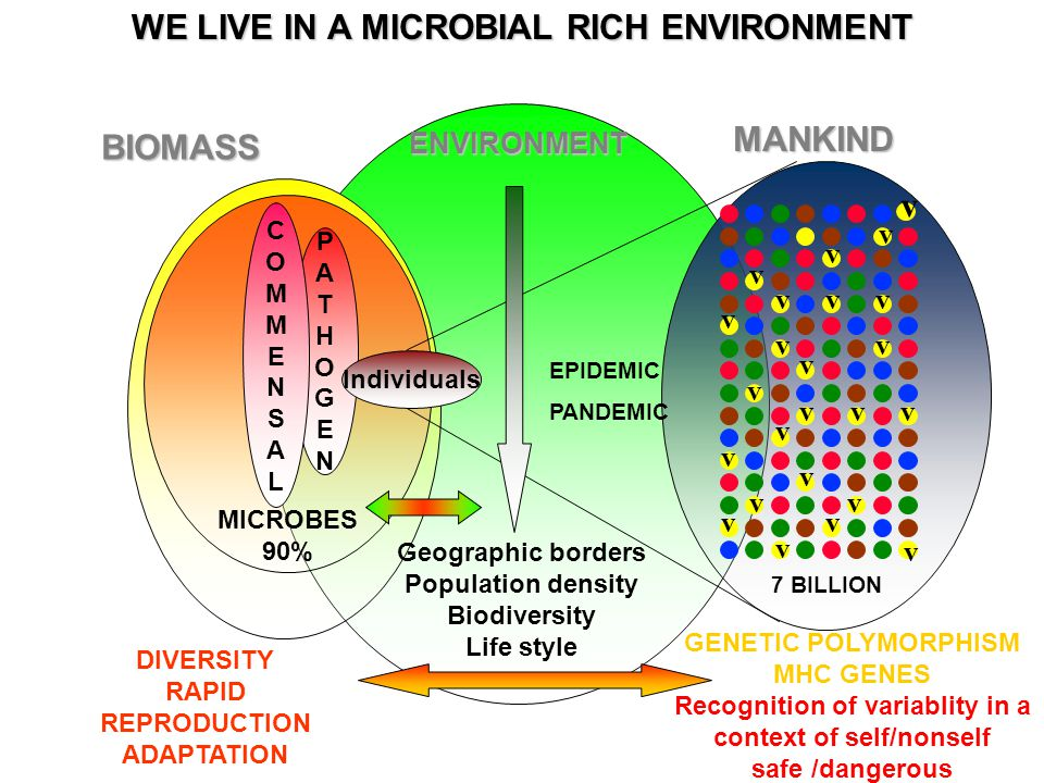MICROBES 90% PATHOGENPATHOGEN COMMENSALCOMMENSAL Individuals 7 BILLION GENETIC POLYMORPHISM MHC GENES Recognition of variablity in a context of self/nonself safe /dangerous DIVERSITY RAPID REPRODUCTION ADAPTATION Geographic borders Population density Biodiversity Life style BIOMASSENVIRONMENTMANKIND v v v v v v v v v v v v vvv v v v v v v v v v EPIDEMIC PANDEMIC WE LIVE IN A MICROBIAL RICH ENVIRONMENT