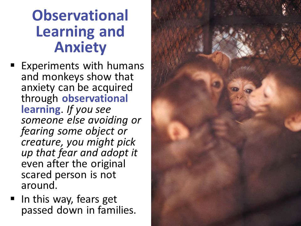 Observational Learning and Anxiety  Experiments with humans and monkeys show that anxiety can be acquired through observational learning.