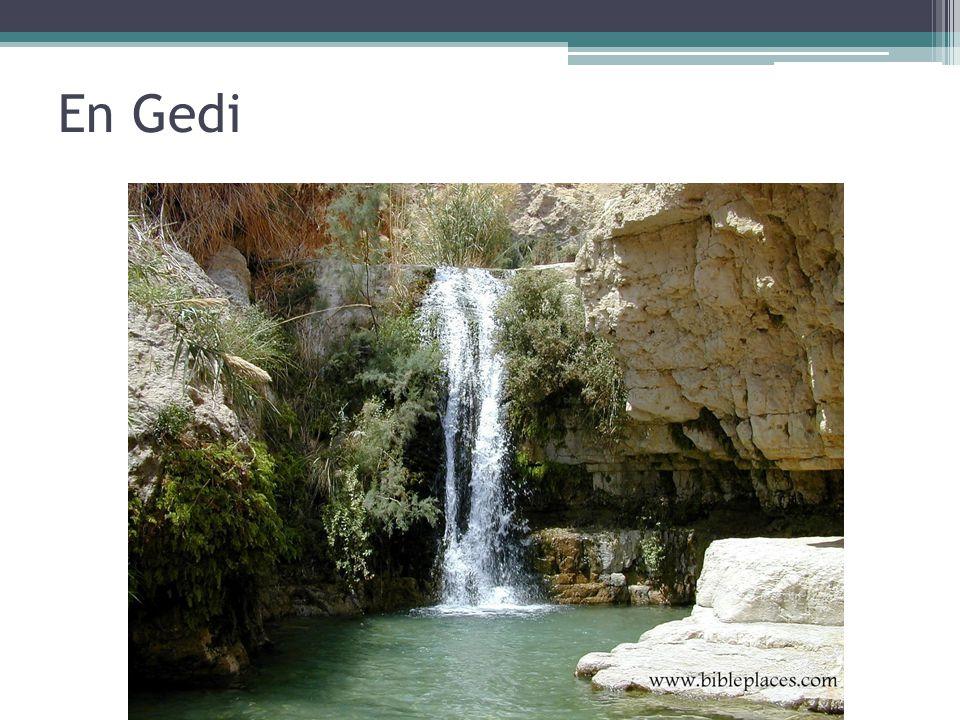 En Gedi