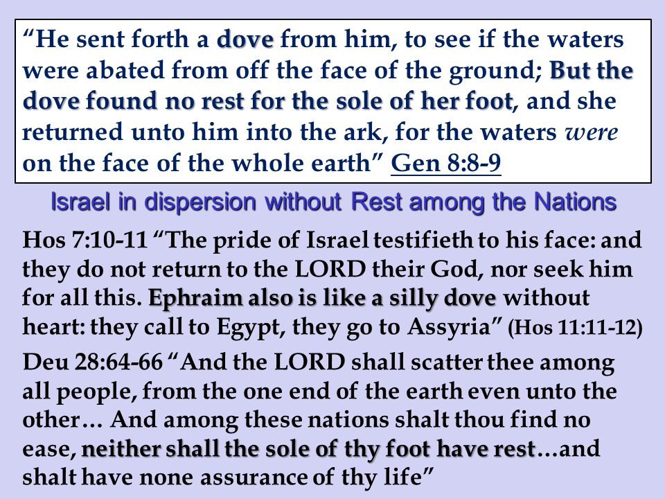 Israel in dispersion without Rest among the Nations Ephraim also is like a silly dove Hos 7:10-11 The pride of Israel testifieth to his face: and they do not return to the LORD their God, nor seek him for all this.