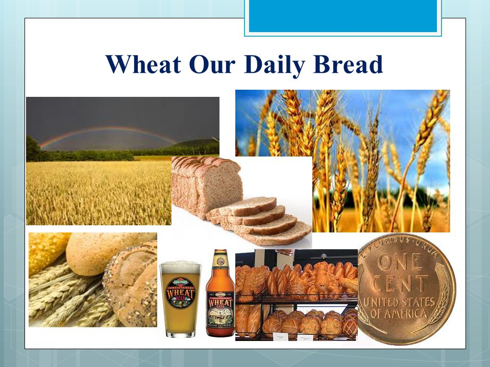 Wheat is Not Wheat  Hybridized and Crossbred  Resistant to drought  Resistant to pathogens  Increased yield per acre  Gluten Proteins  Structurally changed  Can't survive without human support  Never safety tested on humans or animals