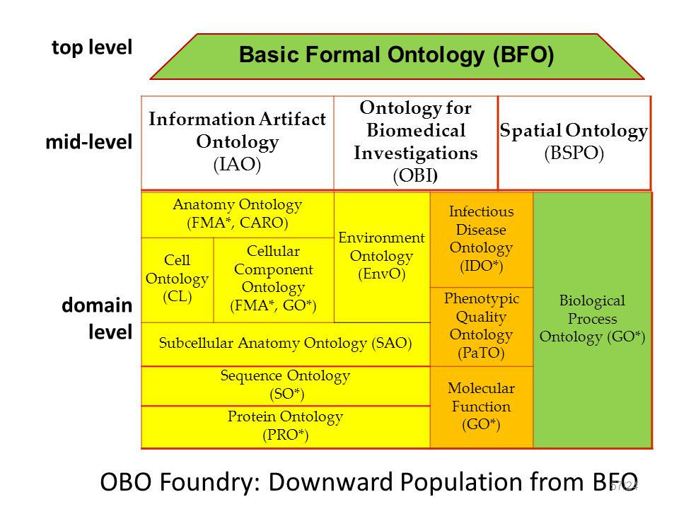 Anatomy Ontology (FMA*, CARO) Environment Ontology (EnvO) Infectious Disease Ontology (IDO*) Biological Process Ontology (GO*) Cell Ontology (CL) Cellular Component Ontology (FMA*, GO*) Phenotypic Quality Ontology (PaTO) Subcellular Anatomy Ontology (SAO) Sequence Ontology (SO*) Molecular Function (GO*) Protein Ontology (PRO*) OBO Foundry: Downward Population from BFO top level mid-level domain level Information Artifact Ontology (IAO) Ontology for Biomedical Investigations (OBI) Spatial Ontology (BSPO) Basic Formal Ontology (BFO) 57/24