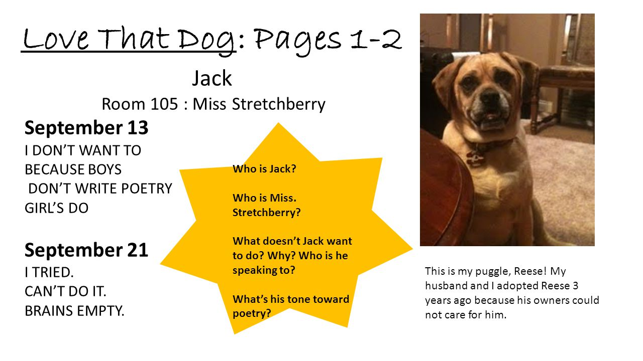 Love That Dog: Pages 1-2 This is my puggle, Reese! My husband and I adopted Reese 3 years ago because his owners could not care for him. Jack Room 105