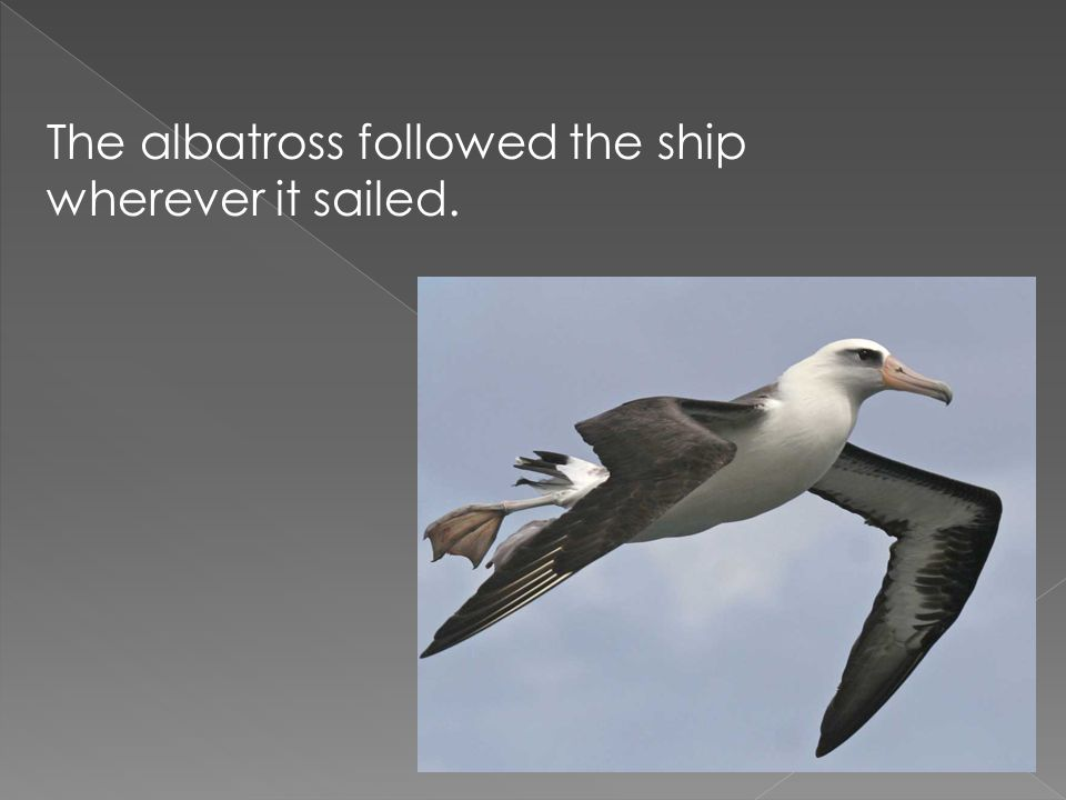 The albatross followed the ship wherever it sailed.