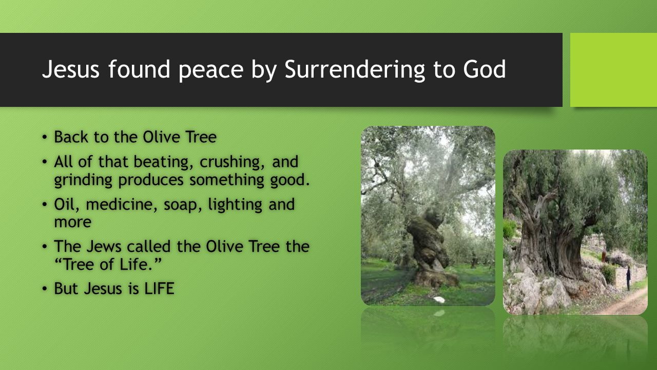 Jesus found peace by Surrendering to God Back to the Olive Tree Back to the Olive Tree All of that beating, crushing, and grinding produces something good.