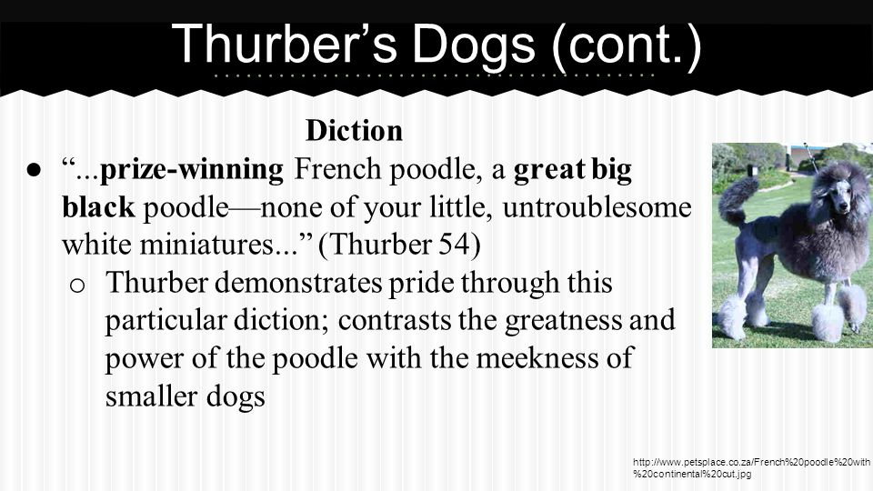 Diction ● ...prize-winning French poodle, a great big black poodle—none of your little, untroublesome white miniatures... (Thurber 54) o Thurber demonstrates pride through this particular diction; contrasts the greatness and power of the poodle with the meekness of smaller dogs Thurber's Dogs (cont.) http://www.petsplace.co.za/French%20poodle%20with %20continental%20cut.jpg