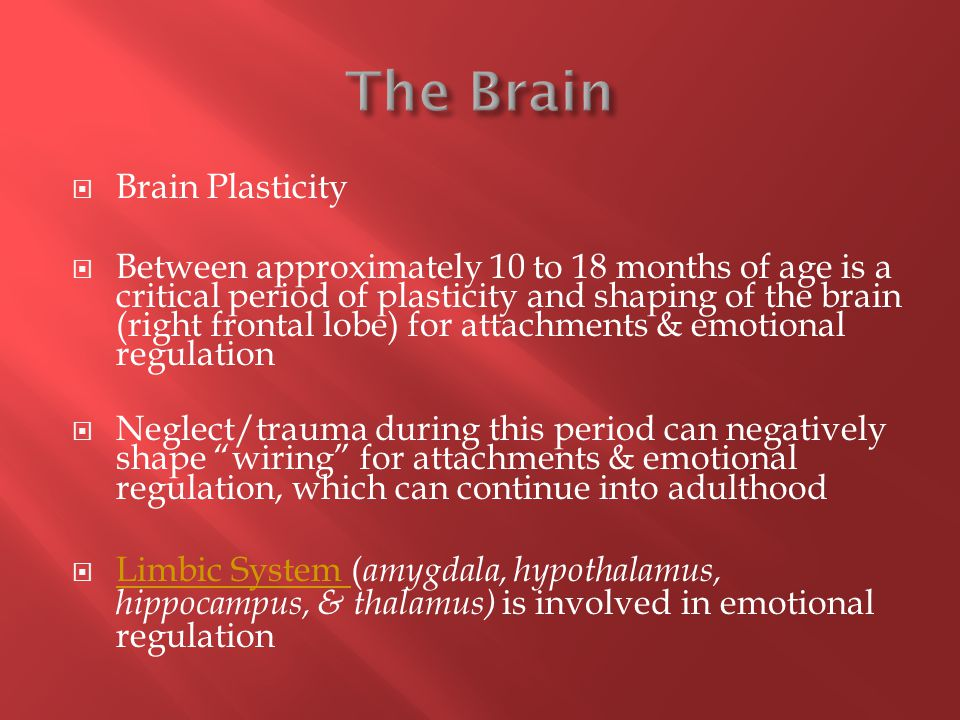  Brain Plasticity  Between approximately 10 to 18 months of age is a critical period of plasticity and shaping of the brain (right frontal lobe) for attachments & emotional regulation  Neglect/trauma during this period can negatively shape wiring for attachments & emotional regulation, which can continue into adulthood  Limbic System ( amygdala, hypothalamus, hippocampus, & thalamus) is involved in emotional regulation Limbic System