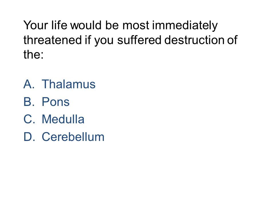 Your life would be most immediately threatened if you suffered destruction of the: A.Thalamus B.Pons C.Medulla D.Cerebellum