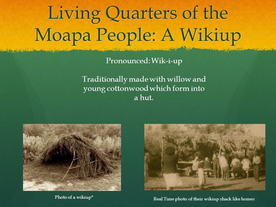 Living Quarters of the Moapa People: A Wikiup Real Time photo of their wikiup shack like homes Photo of a wikiup* Pronounced: Wik-i-up Traditionally m