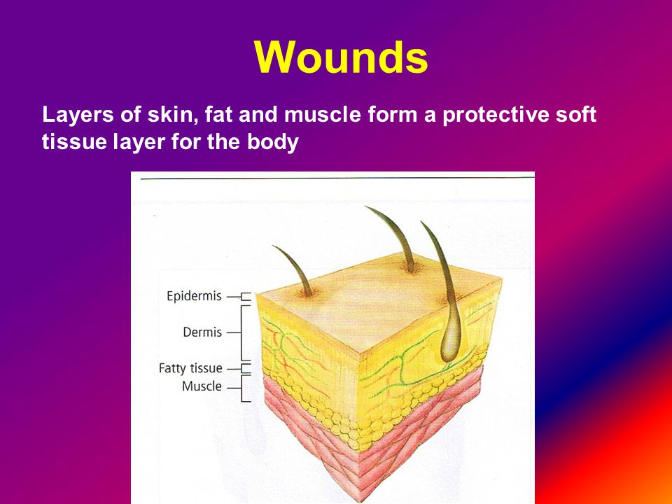 Layers of skin, fat and muscle form a protective soft tissue layer for the body
