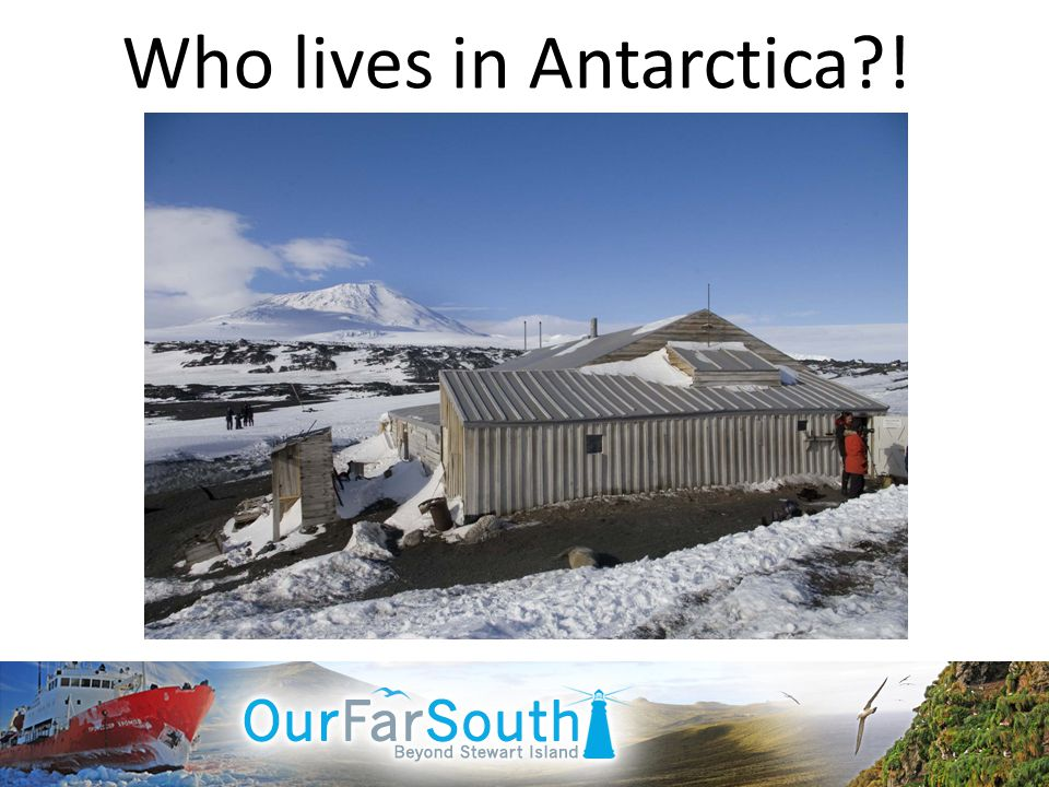 Who lives in Antarctica !