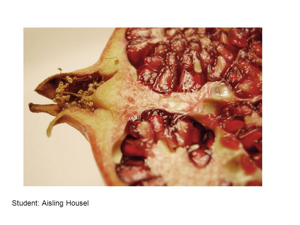 Student: Aisling Housel
