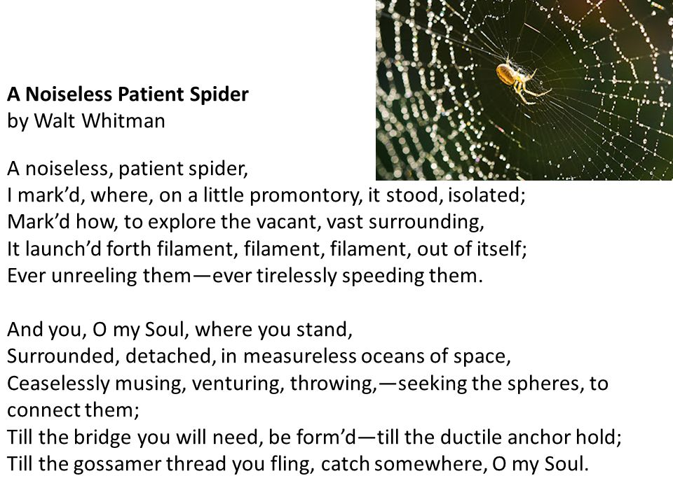 A Noiseless Patient Spider by Walt Whitman A noiseless, patient spider, I mark'd, where, on a little promontory, it stood, isolated; Mark'd how, to explore the vacant, vast surrounding, It launch'd forth filament, filament, filament, out of itself; Ever unreeling them—ever tirelessly speeding them.