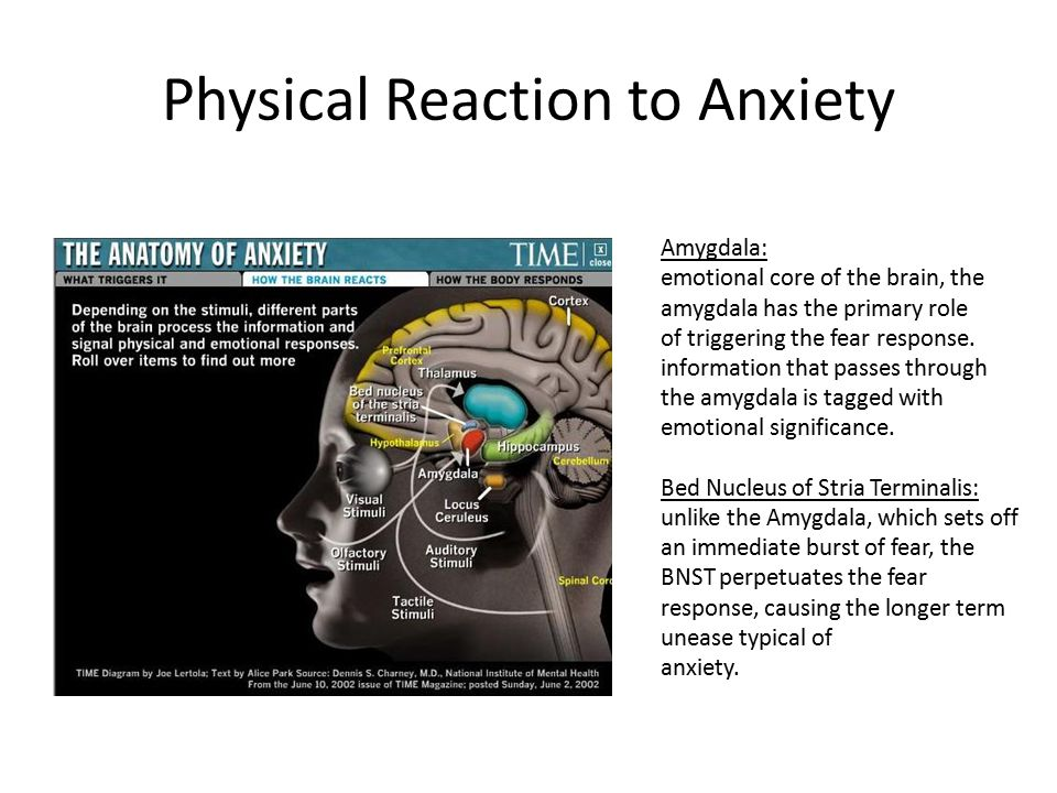 Physical Reaction to Anxiety Amygdala: emotional core of the brain, the amygdala has the primary role of triggering the fear response. information tha