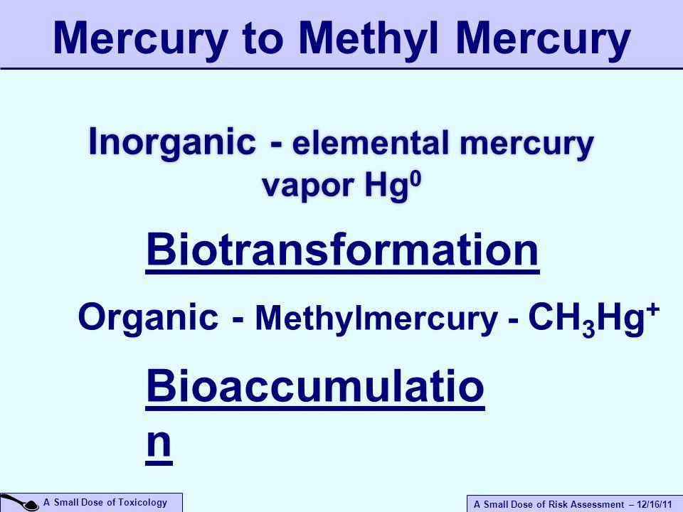 A Small Dose of Risk Assessment – 12/16/11 A Small Dose of Toxicology Inorganic - elemental mercury vapor Hg 0 Biotransformation Organic - Methylmercu