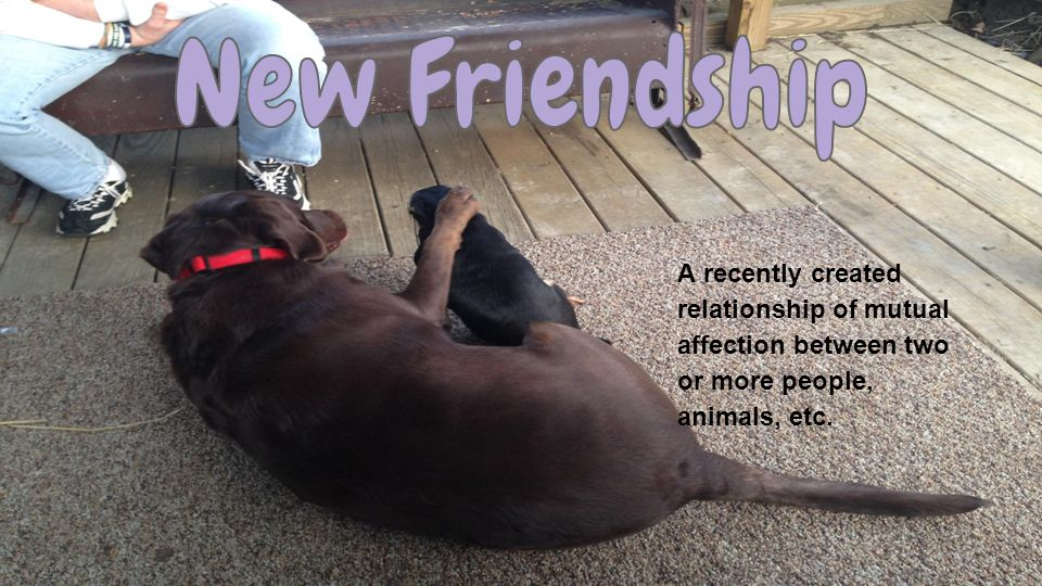 A recently created relationship of mutual affection between two or more people, animals, etc.