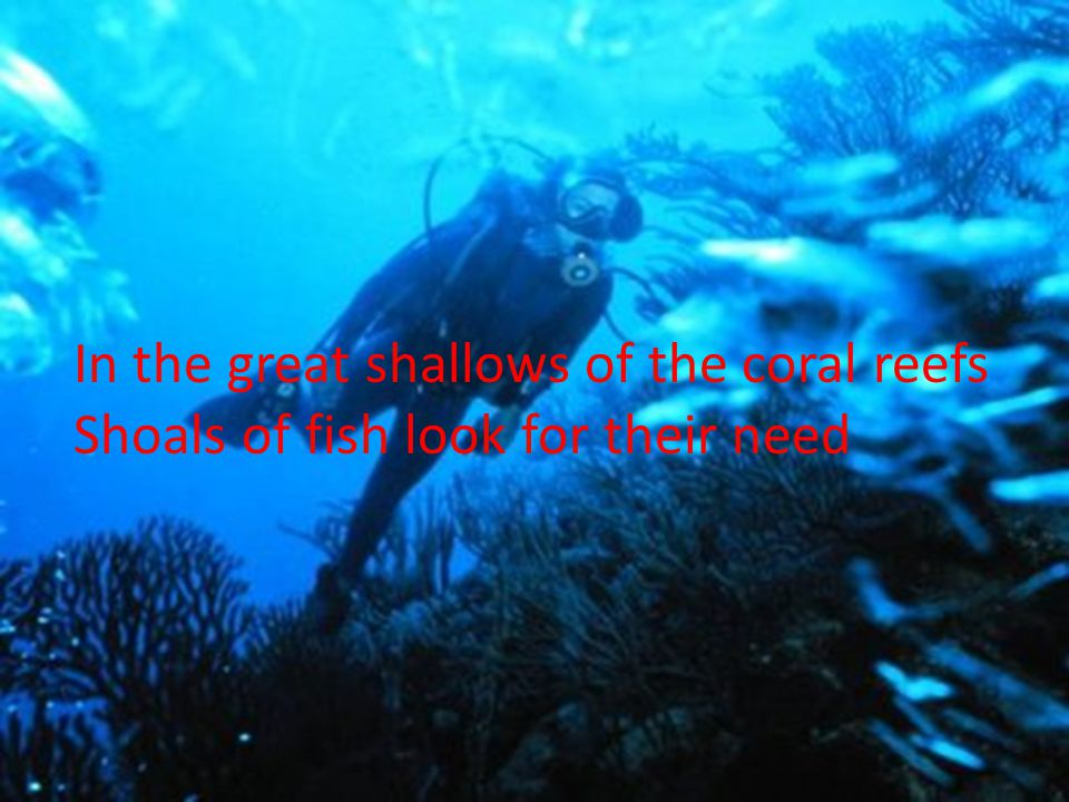 In the great shallows of the coral reefs Shoals of fish look for their need