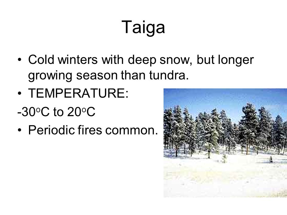 Taiga Cold winters with deep snow, but longer growing season than tundra.