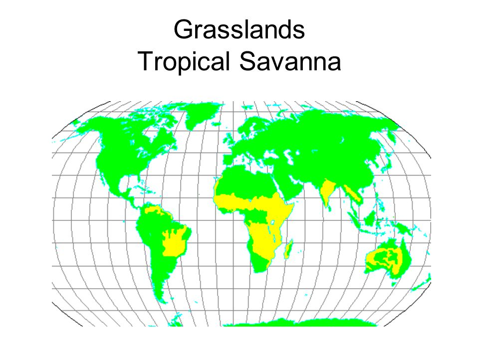 Grasslands Tropical Savanna